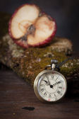Old watch on  old tree with moss. — Stock Photo