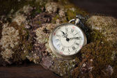 Old watch on  old tree with moss. — 图库照片