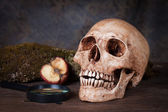 Weathered human skull, Still life — Stock Photo