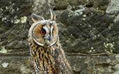 Birds of prey, — Stock Photo