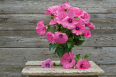 Fresh garden pink petunia bouquet in vase on wooden table — Stock Photo