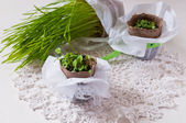 Seedlings in plantings pots on lace napkin — Stock Photo