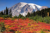 Mount Rainier fall colors — Stock Photo
