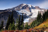 Mount rainier — Stock fotografie