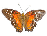 Butterfly Isolated — Stockfoto