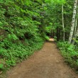 Forest hiking trail — Stock Photo #37687769