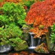 Stock Photo: Autumn garden