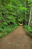 Forest hiking trail — Stock Photo