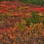 Vivid colors of autumn — Stock Photo