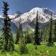 Mt. Rainier from Sunrise — 图库照片