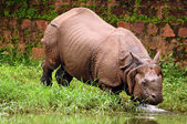 Rhino bathing in river — Stock Photo