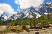 The Himalayas in Sikkim — Stock Photo