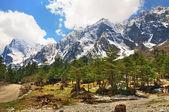 O himalaia em sikkim — Foto Stock