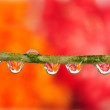 Stock Photo: Dewdrop refraction