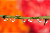 Dewdrop refraction — Stock Photo