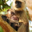Stock Photo: Family bond in primates