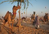 Pushkar camel fair — Stock Photo