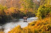 Džungle scenérie — Stock fotografie