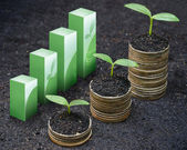 Tress growing on coins — Stock Photo