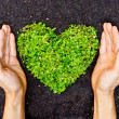 Hands holding green heart shaped tree — Stock Photo