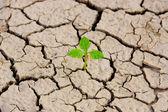 Boom groeien op gebarsten aarde — Stockfoto