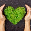 Hands holding green heart shaped tree — Stock Photo #39530109