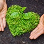 Hands holding green heart shaped tree — Stock Photo #39530233