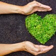 Hands holding green heart shaped tree — Stock Photo #39530241