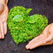 Hands holding green heart shaped tree — Stock Photo #39530247