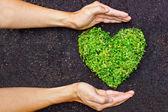 Hands holding green heart shaped tree — Stock Photo