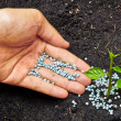 Hand giving fertilizer to young plant - planting tree — Stock Photo #39658347