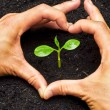 Two hands forming a heart shape around a young green plant - planting tree — Stock Photo