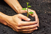 Two hands holding and caring a young green tree — Stock Photo