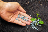 A hand giving fertilizer to a young plant - planting tree — Stock Photo