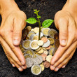 Hands holding tress growing on coins — Stock Photo #39660649