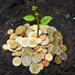 Tress growing on coins — Stock Photo #39660733