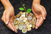 Hands holding tress growing on coins — Stock Photo