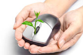 Hands holding a tree growing on a mouse — Stock Photo