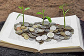 Tree growing from books with coins — Stock Photo