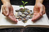 Hands caring tree growing from books with coins — Stock Photo