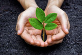 Two hands growing a young green plant — Stock Photo