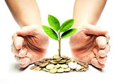 Tree growing on coins — Stock Photo