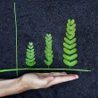 Tree arranged as a green graph — Stock Photo