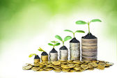 Trees growing on coins — Stock Photo