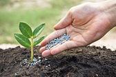Growing tree — Stock Photo