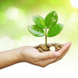 Tree growing on coins — Stock Photo #48520411
