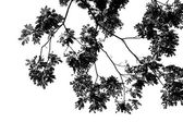 Abstract background with leaves silhouette — Stock Photo