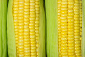 Corn cob between green leaves — Stock Photo