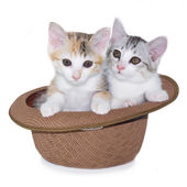 Kitten sitting in hat — Stock Photo