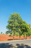 Tree on roadside — Stockfoto